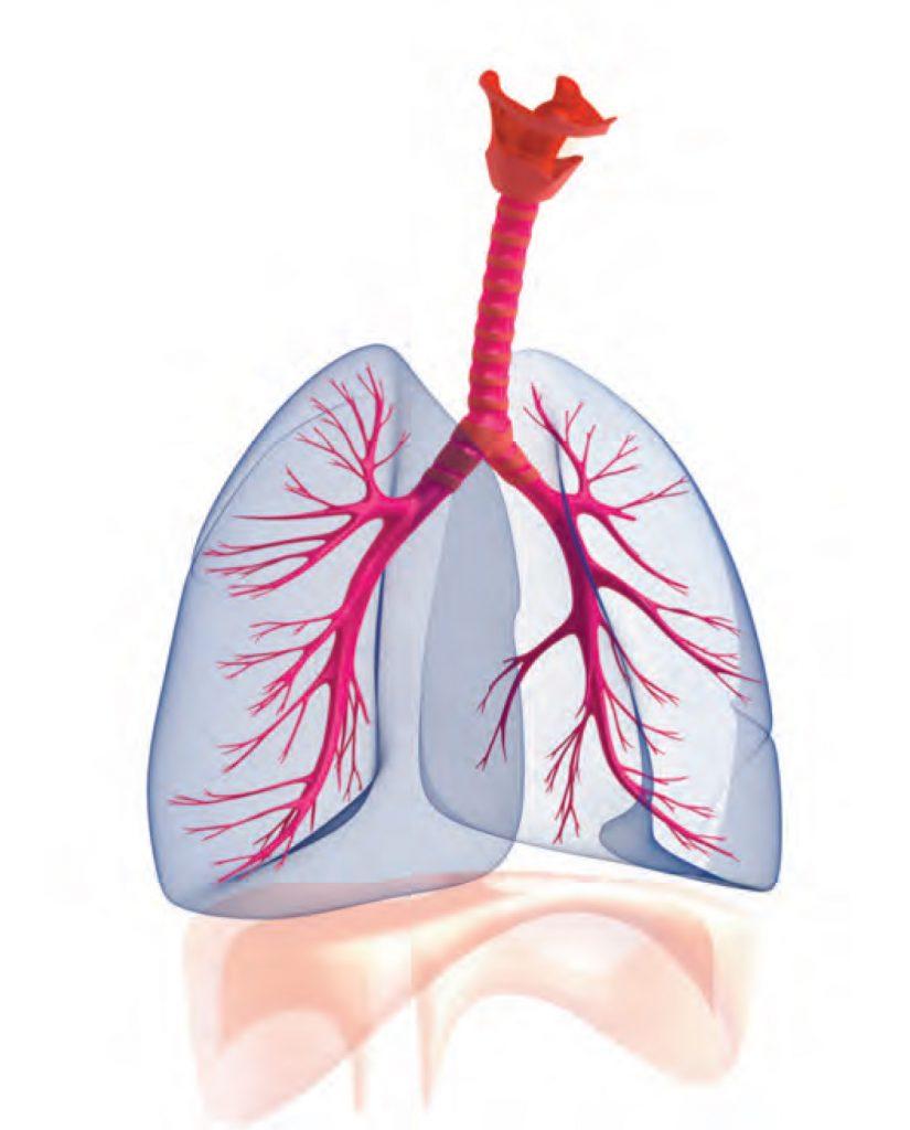 Foto-Geiseler-1-1024x957 Formen der Atmungsschwäche